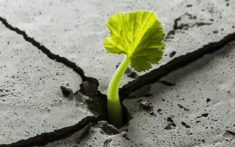 libri sulla resilienza