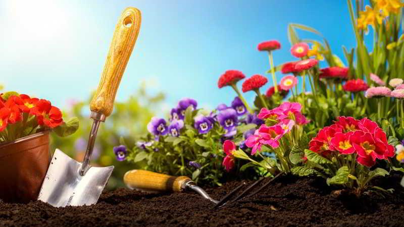 Migliori attrezzi per il giardinaggio