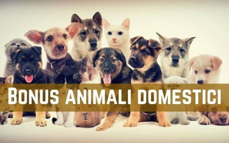 bonus animali domestici